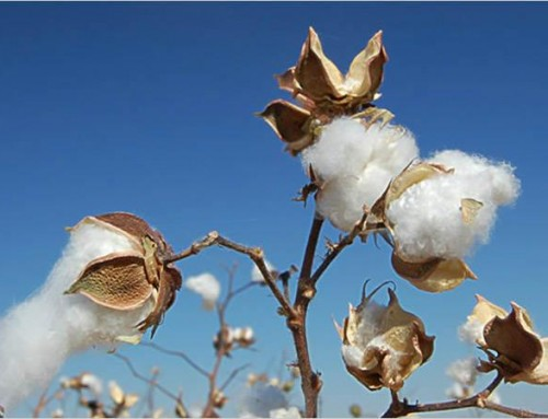 Applied DNA Sciences Receives Initial Order to Tag Cotton for the Upcoming 2017/2018 US Cotton Ginning Season